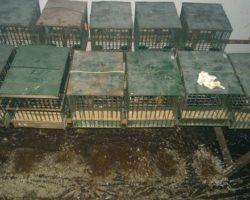 Castiglione dei Pepoli: sequestrato il lager dei volatili