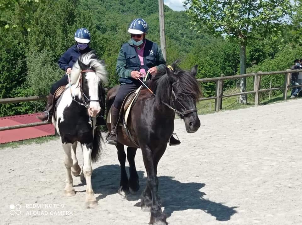 Allenamento con i cavalli